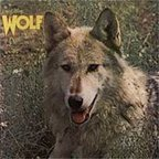 Darryl Way's Wolf - Canis Lupus