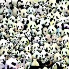 Death Sentence: Panda! - Puppy, Kitty Or Both