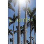 Exercise - s/t