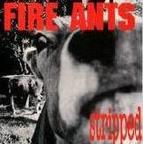 Fire Ants - Stripped