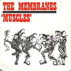 Membranes - Muscles