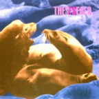 SF Seals - Nowherica
