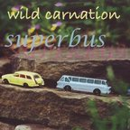 Wild Carnation - Superbus